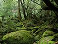 白谷雲水峡(太鼓岩)ガイド イメージ