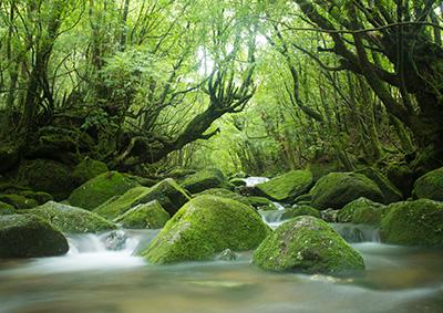 フォトトレッキング(ハイアマチュア) ツアー風景写真1